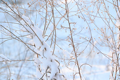 Remembering Snow 01