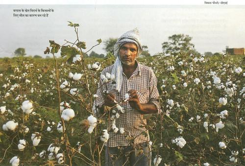 कपास के खेत विदर्भ के किसानों के लिये मौत का कारण बन रहे हैं