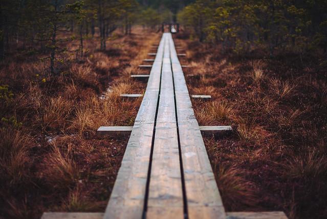 Ķemeri Bog Boardwalk | Latvia #359/365