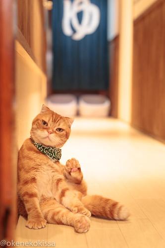 アトリエイエネコ Cat Photographer 39387546121_73f13395ed 保護猫譲渡カフェ 和風桶猫喫茶 with ラブファイブ