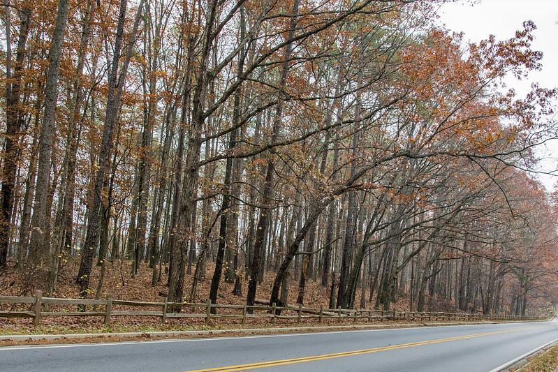 Georgia road