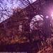 Sun Through Copley Viaduct,