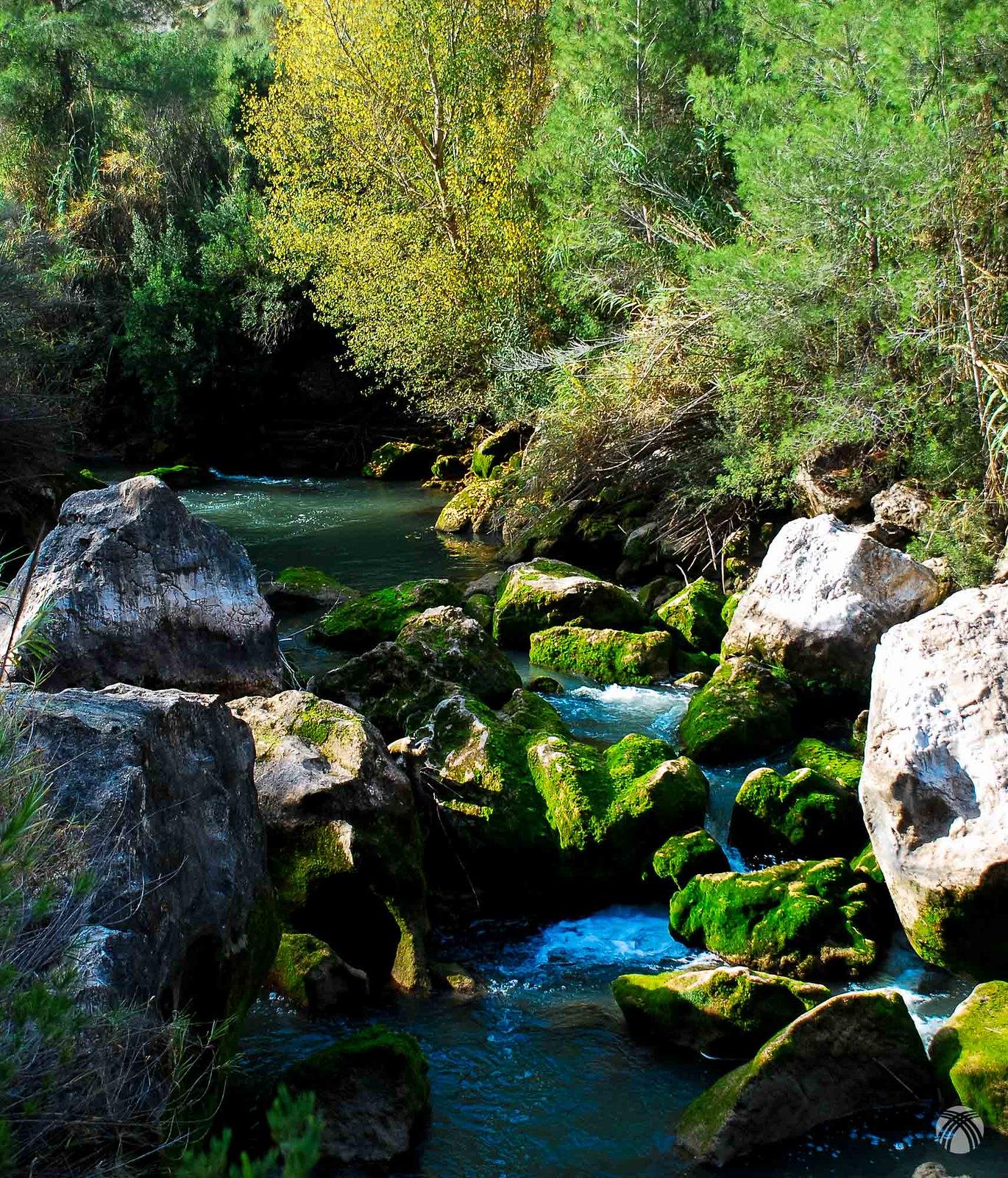 El río aquí está vivo