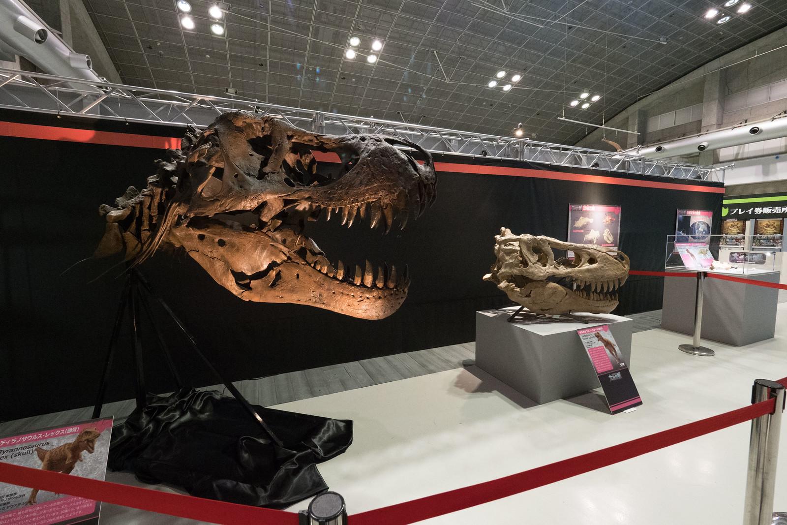 大恐竜博-20