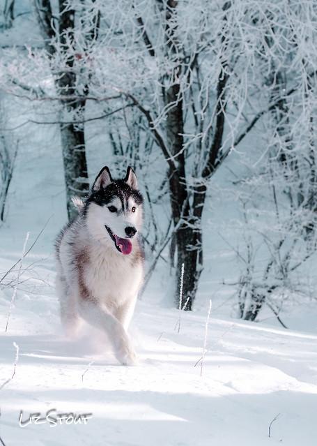 20180102 Snowdogs_198