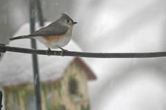 snow birds IMG_7257
