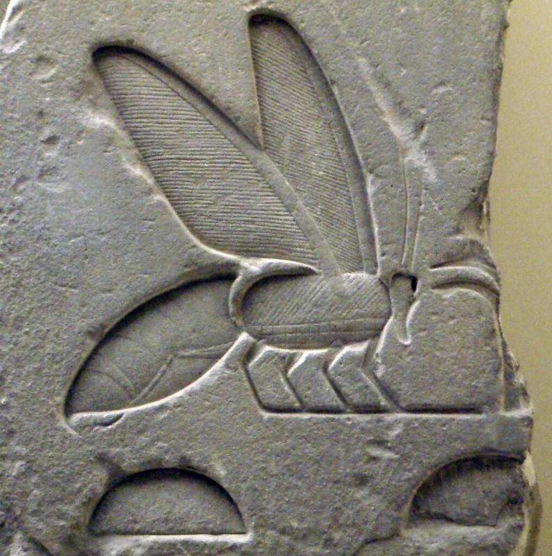A Bee Hieroglyph from the tomb complex of Senusret I
