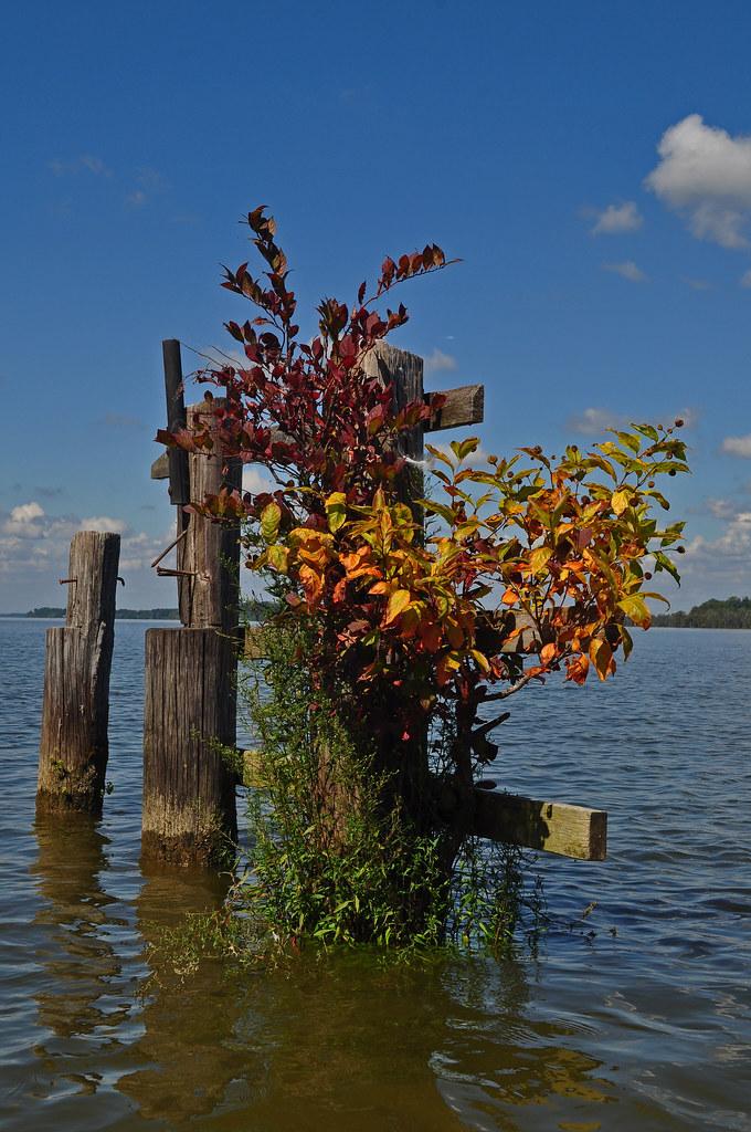 James River Piling Garden