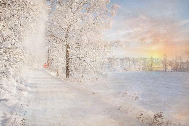Winter landscpae.