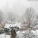 Central Park Snow (20171209-DSC04438)