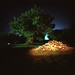 Tree and wood at night with flashlight by DannyOKC