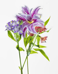 lilies-three