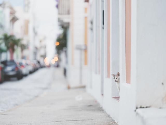 Feral cat Old San Juan Puerto Rico