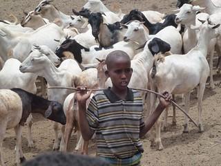 Herder boy takes goats to the communal water point of watering, Garba Tulla, Kenya