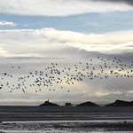 over Mumbles