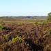 New Forest panorama