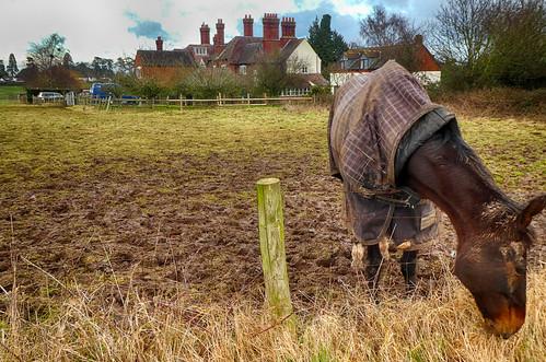 Horse and Little Eastbury