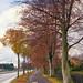 autumnal boulevard.jpg