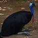 <p><a href=&quot;http://www.flickr.com/people/140820502@N08/&quot;>exploreslk</a> posted a photo:</p>&#xA;&#xA;<p><a href=&quot;http://www.flickr.com/photos/140820502@N08/38970383272/&quot; title=&quot;Emu bird&quot;><img src=&quot;http://farm5.staticflickr.com/4596/38970383272_ea68f74fd4_m.jpg&quot; width=&quot;240&quot; height=&quot;160&quot; alt=&quot;Emu bird&quot; /></a></p>&#xA;&#xA;<p>Click to read more on <a href=&quot;http://exploreslk.com/dehiwala-zoo/&quot; rel=&quot;nofollow&quot;>Dehiwala Zoo</a>. <br />&#xA;<br />&#xA;Feel free to use this image, but give credits to <a href=&quot;http://exploreslk.com/&quot; rel=&quot;nofollow&quot;>exploreslk.com</a>.</p>