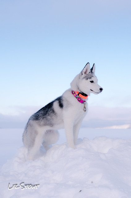 20180102 Snowdogs_234