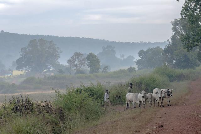 Maikal hills - Chhattisgarh - India