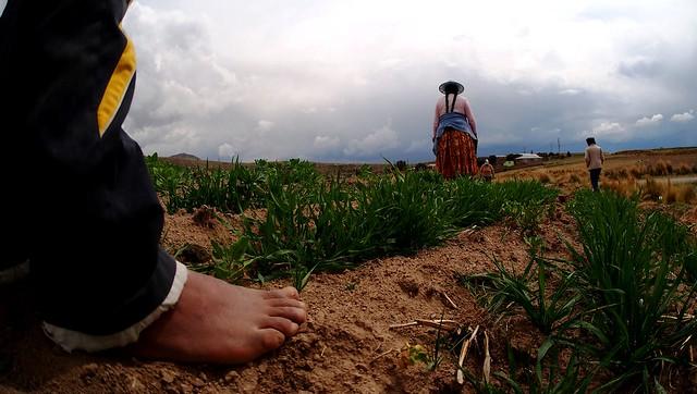Quinoa Farmers