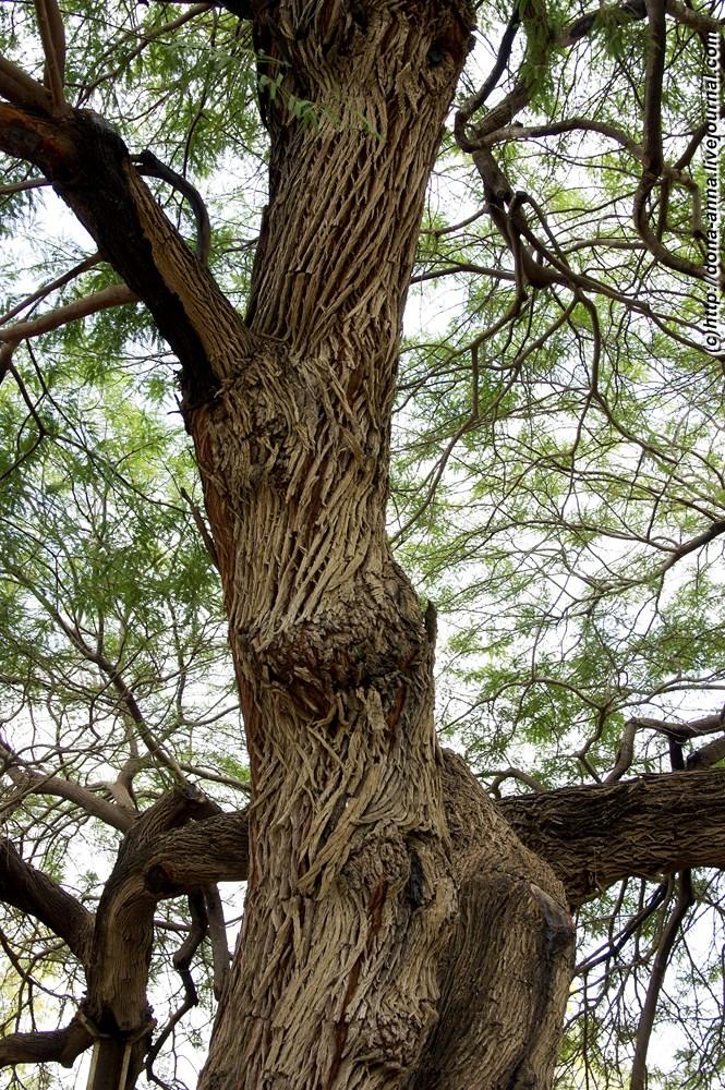 Скачать звук ломаются деревья