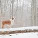Snowy Uno by aussieinyellow