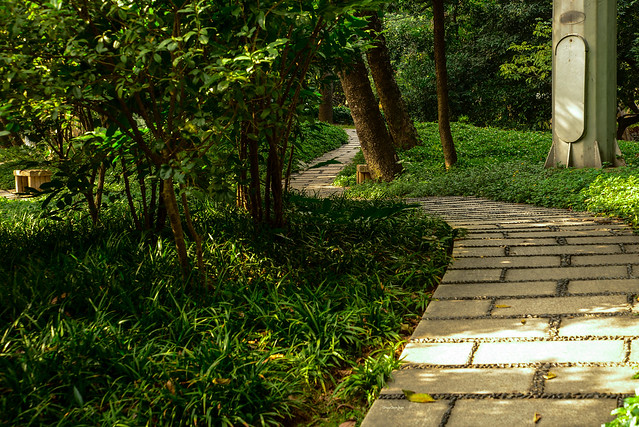 A winding path opens up on an enchanting view