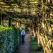 Nymans Gardens