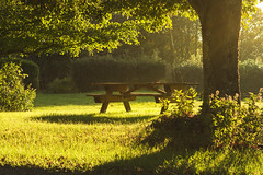 Wooden bench in sunlight