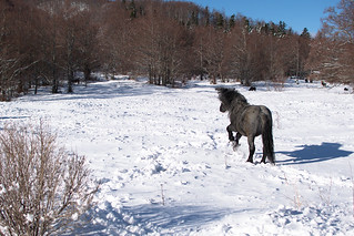 The Horse in Snow