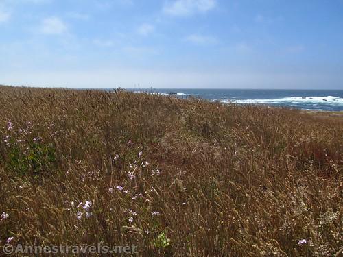 Blufftop grass and wildflowers near Glass Beach, California