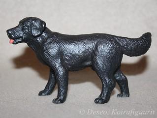 Labradorinnoutaja, musta_wm
