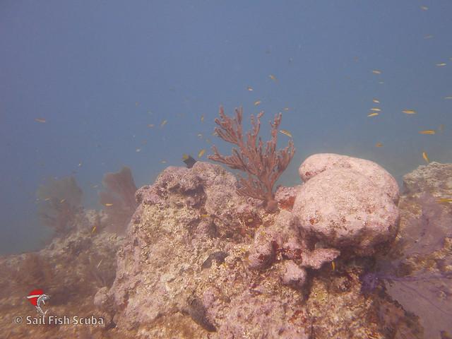 benwood-wreck-french-reef-8-december-2017