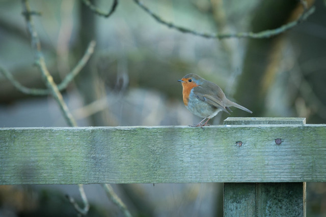 HFF and a robin