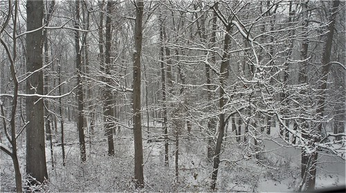 At Home: Snowy Woods