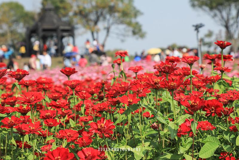 2017臺中國際花毯節20