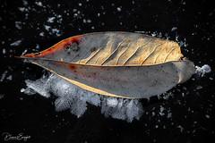 Frozen Lake Leaf 2