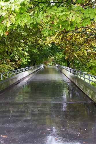 landscape ljubljana slovenia canoneos7d bridge colourful september autumn park leaves steel grey green wet tivolipark reflection perspective scene rain