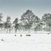 Winterlandschap met schapen