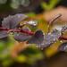 rainwater droplets on leaves...