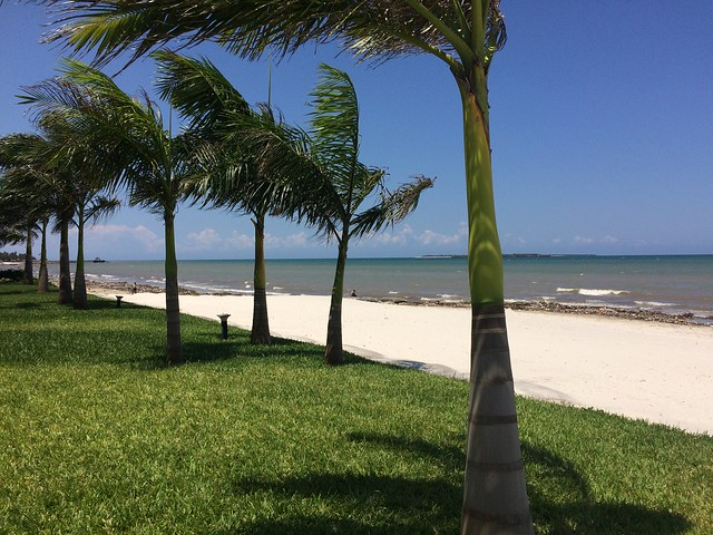 Beach + trees