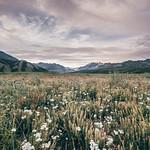 Alaska, primi passi