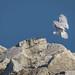 Owl Landing Gear Down