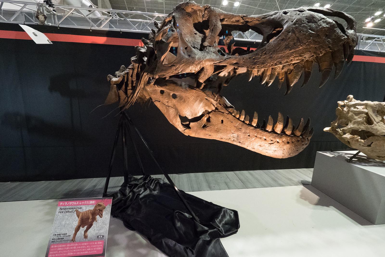 大恐竜博-22