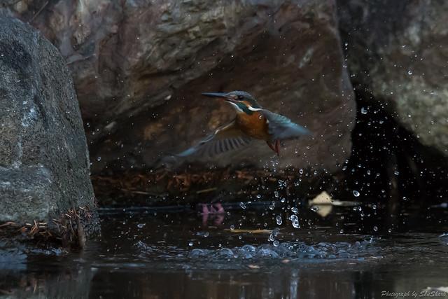 20171229-kingfisher-DSC_2789