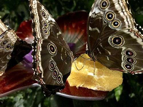 Live butterflies at the Museum of Nature