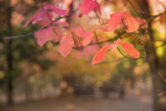 Fall in Yosemite