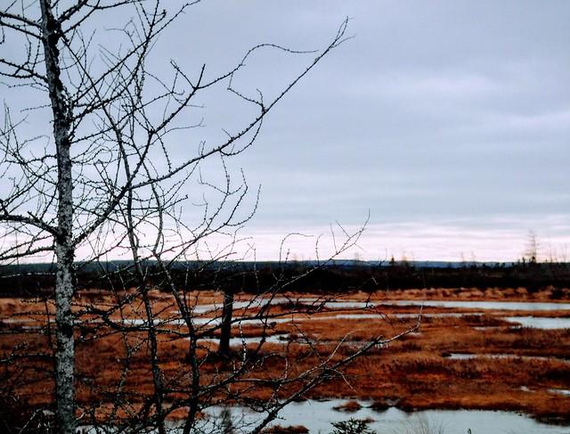 Peat Bog in December, Sony DSC-T90